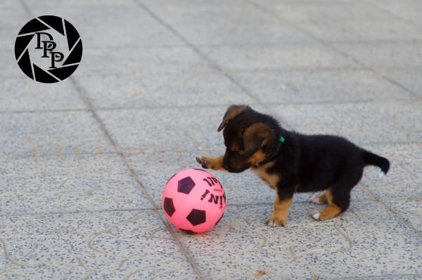 14041 - Soccer player