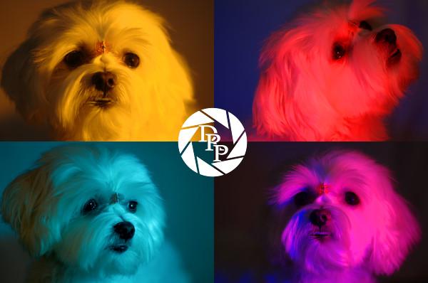 15813 - 22 - 41- 46 - Kira Warhol