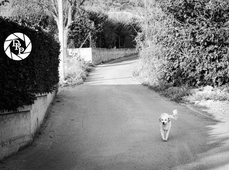 Tiffany fa una passeggiata