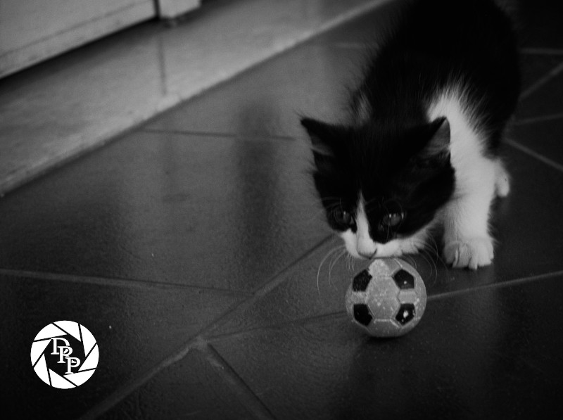 Manlio gioca a palla