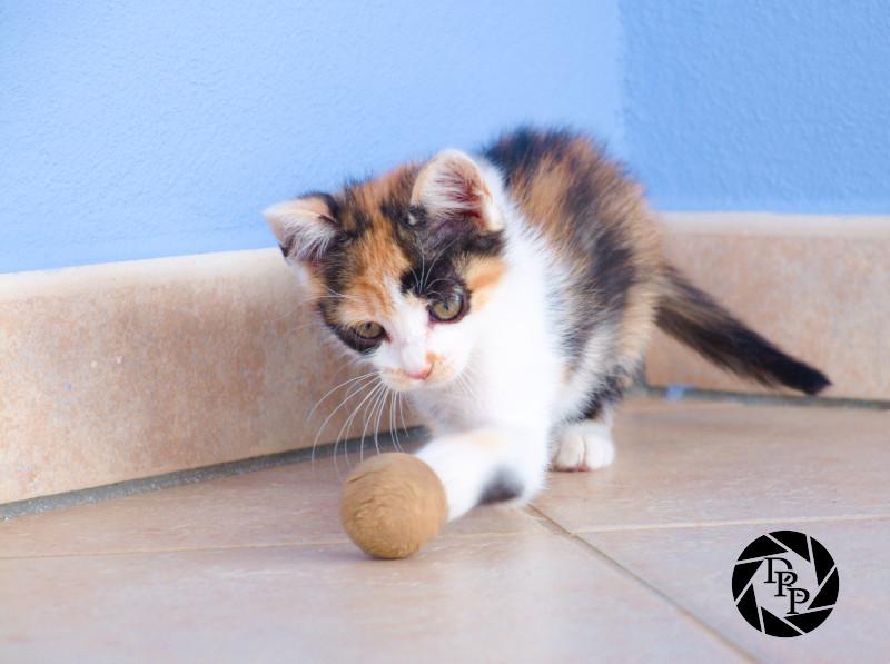 Cordelia gioca a palla