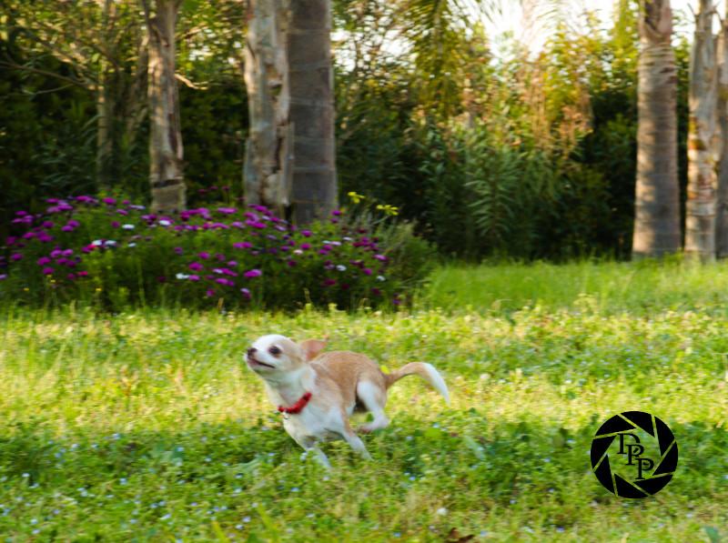 Rey corre in giardino